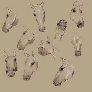 Horse_Head_Perspectives_by_eponagirl